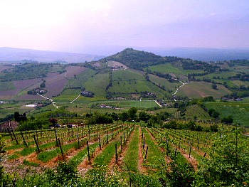 http://www.italy-tours-in-nature.com/images/bertinoro005.jpg